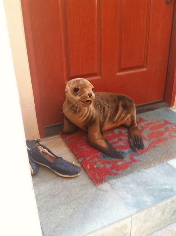 Ζώα που ήρθαν απλώς να πουν ένα γεια (7)