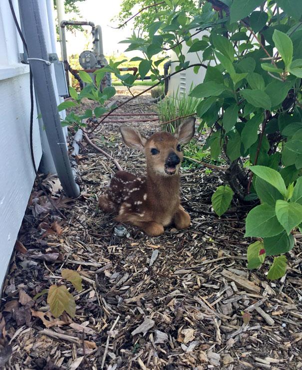 Ζώα που ήρθαν απλώς να πουν ένα γεια (16)