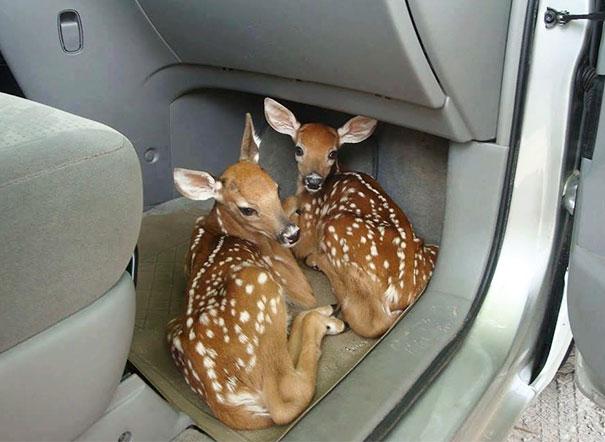 Ζώα που ήρθαν απλώς να πουν ένα γεια (25)