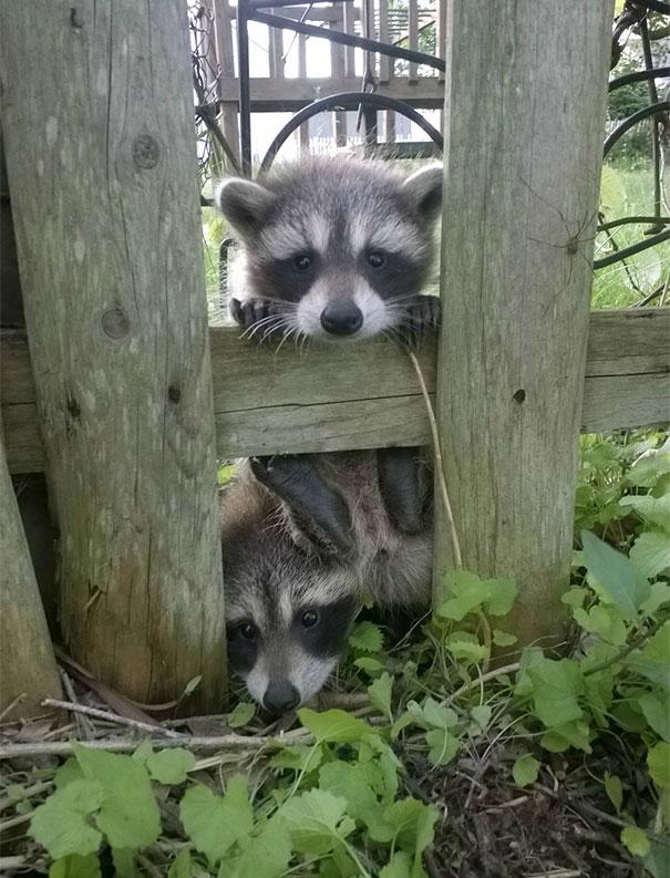 Ζώα που ήρθαν απλώς να πουν ένα γεια (26)