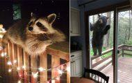 Ζώα που ήρθαν απλώς να πουν ένα γεια (27)