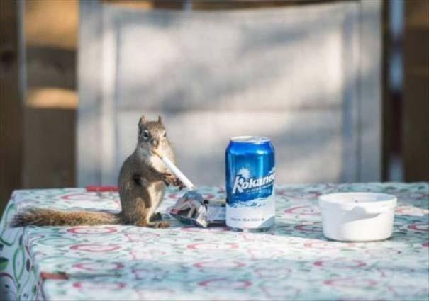 22 ζώα που κάνουν την καθημερινότητα πιο διασκεδαστική (12)
