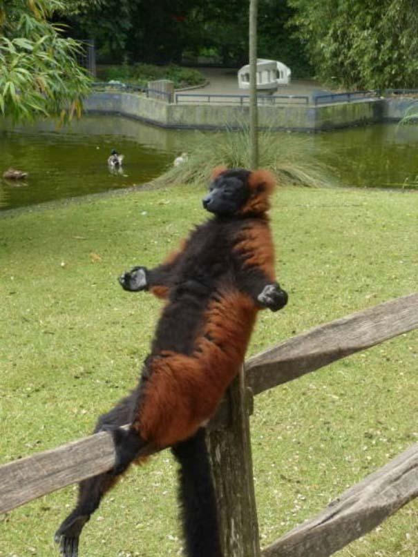 22 ζώα που κάνουν την καθημερινότητα πιο διασκεδαστική (22)