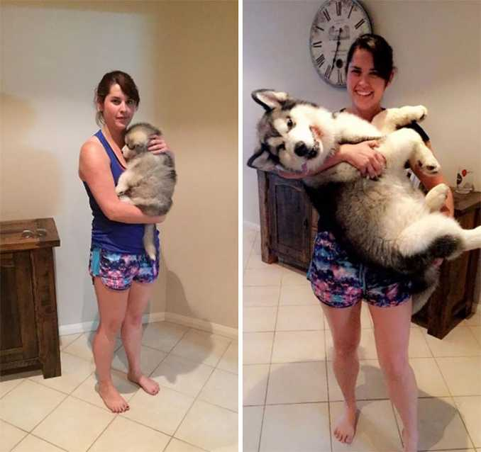 Αξιολάτρευτες φωτογραφίες σκύλων πριν και μετά την ανάπτυξή τους (2)