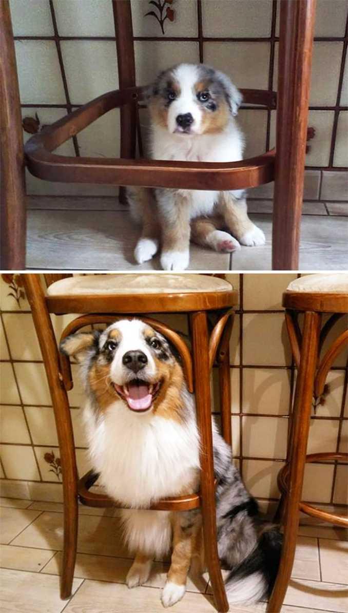 Αξιολάτρευτες φωτογραφίες σκύλων πριν και μετά την ανάπτυξή τους (5)