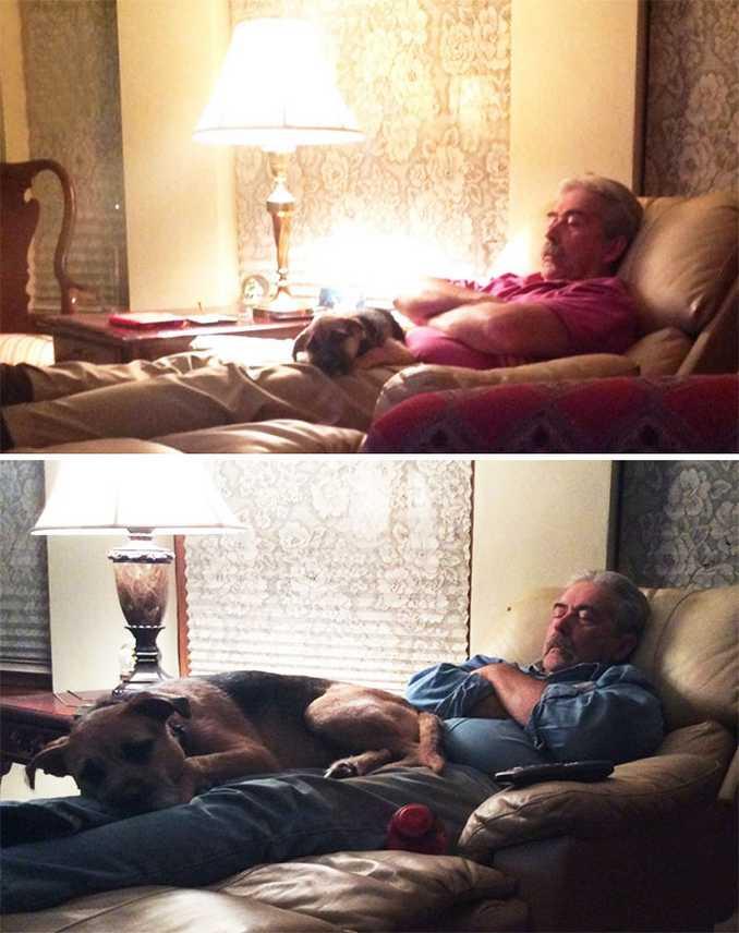 Αξιολάτρευτες φωτογραφίες σκύλων πριν και μετά την ανάπτυξή τους (7)