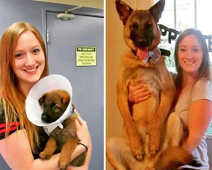 Αξιολάτρευτες φωτογραφίες σκύλων πριν και μετά την ανάπτυξή τους (12)