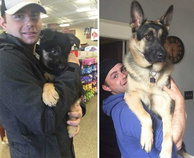 Αξιολάτρευτες φωτογραφίες σκύλων πριν και μετά την ανάπτυξή τους (13)
