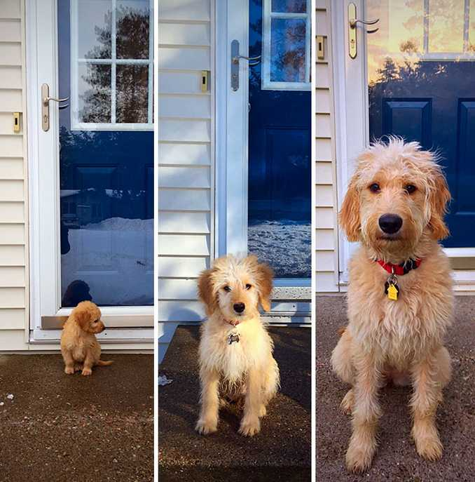 Αξιολάτρευτες φωτογραφίες σκύλων πριν και μετά την ανάπτυξή τους (17)