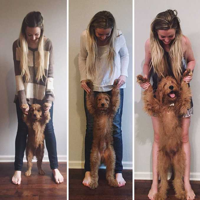 Αξιολάτρευτες φωτογραφίες σκύλων πριν και μετά την ανάπτυξή τους (18)