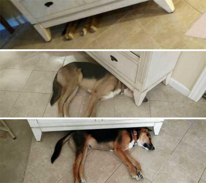 Αξιολάτρευτες φωτογραφίες σκύλων πριν και μετά την ανάπτυξή τους (19)