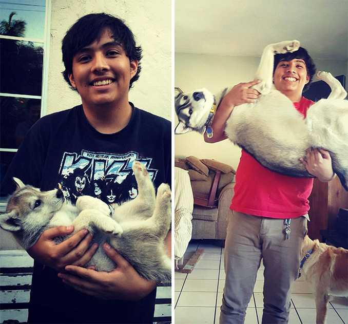 Αξιολάτρευτες φωτογραφίες σκύλων πριν και μετά την ανάπτυξή τους (25)