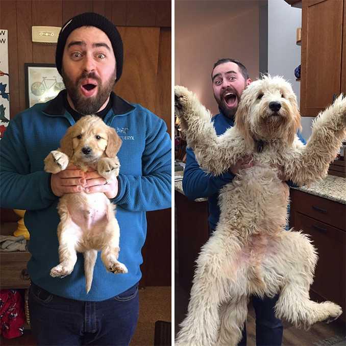 Αξιολάτρευτες φωτογραφίες σκύλων πριν και μετά την ανάπτυξή τους (27)