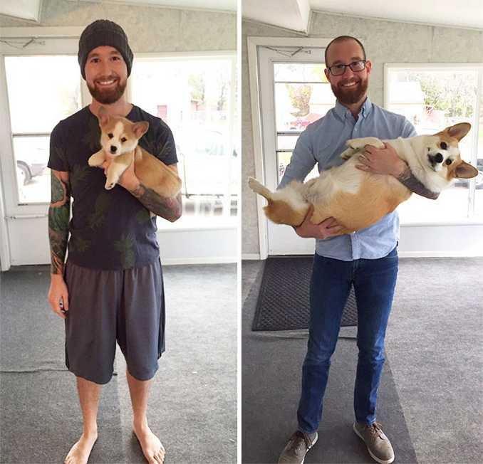 Αξιολάτρευτες φωτογραφίες σκύλων πριν και μετά την ανάπτυξή τους (30)