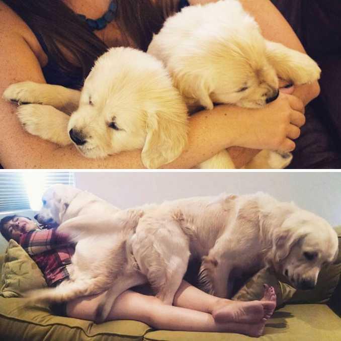 Αξιολάτρευτες φωτογραφίες σκύλων πριν και μετά την ανάπτυξή τους (32)