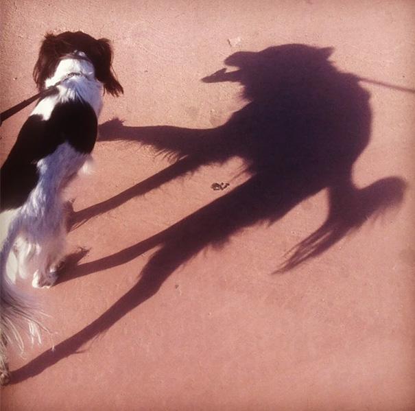 Απίστευτες σκιές που θα σας κάνουν να κοιτάξετε πιο προσεκτικά (22)