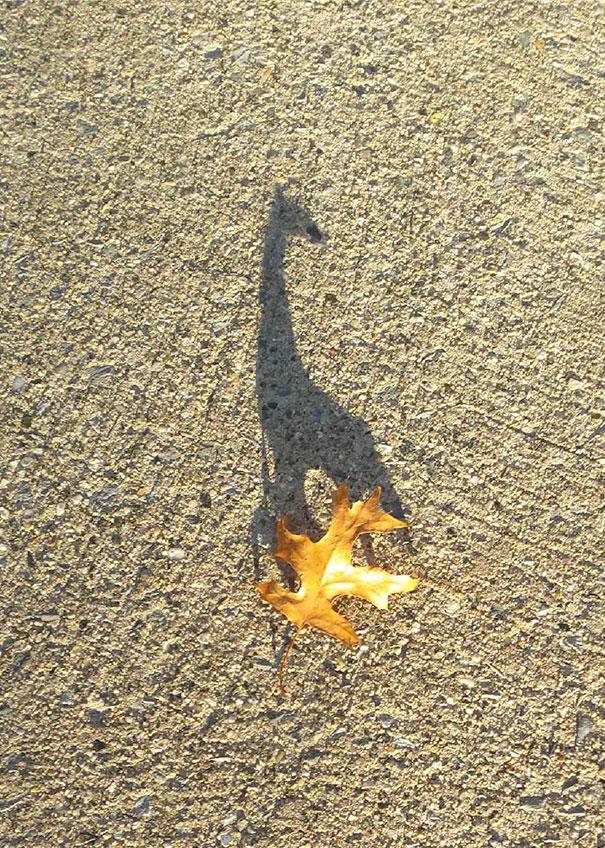 Απίστευτες σκιές που θα σας κάνουν να κοιτάξετε πιο προσεκτικά (31)