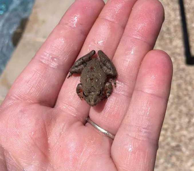 FrogLog (2)