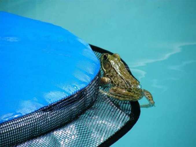 FrogLog (5)