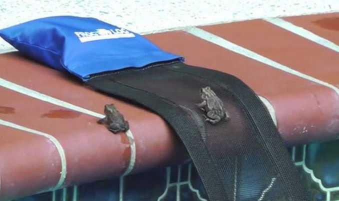 FrogLog (7)