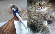 Γάτες που... κάνουν τα δικά τους! #53 (1)