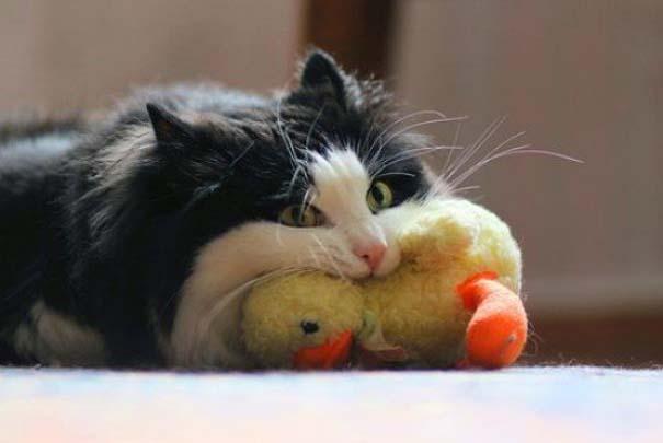 Γάτες που... κάνουν τα δικά τους! #54 (7)