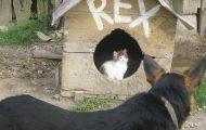 Γάτες που... κάνουν τα δικά τους! #54 (1)