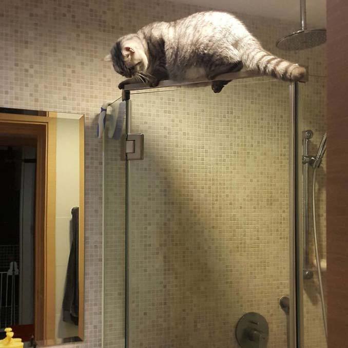 Γάτες που... κάνουν τα δικά τους! #54 (10)