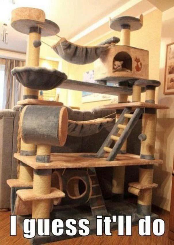 Γάτες που... κάνουν τα δικά τους! #54 (5)