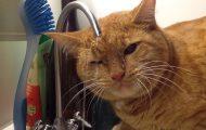 Γάτες που δεν διεκδικούν βραβείο εξυπνάδας