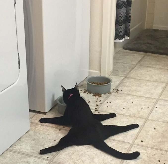 Γάτες που φέρονται πραγματικά παράξενα (1)