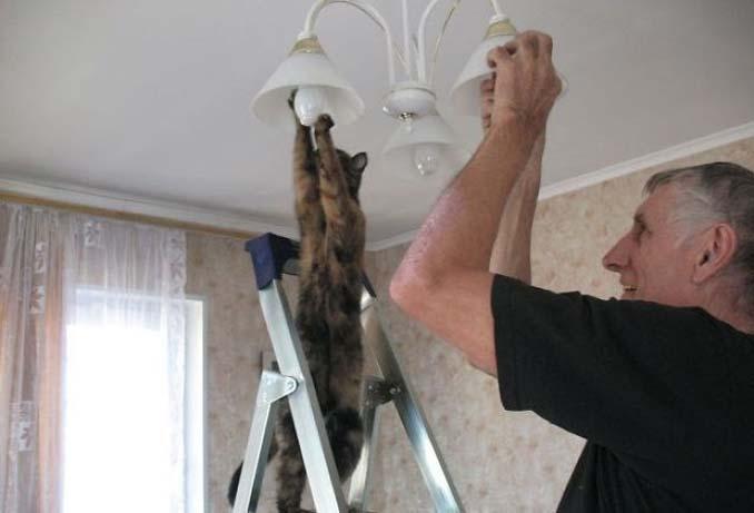 Γάτες που φέρονται πραγματικά παράξενα (2)