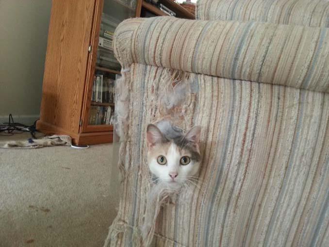 Γάτες που φέρονται πραγματικά παράξενα (3)