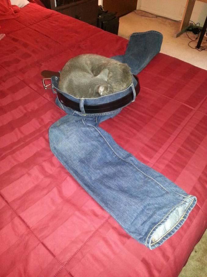 Γάτες που φέρονται πραγματικά παράξενα (4)