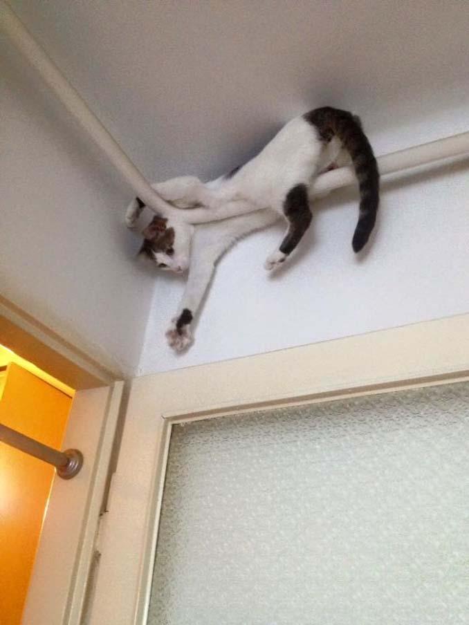 Γάτες που φέρονται πραγματικά παράξενα (6)