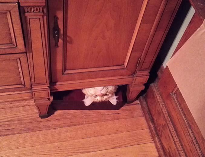 Γάτες που φέρονται πραγματικά παράξενα (12)