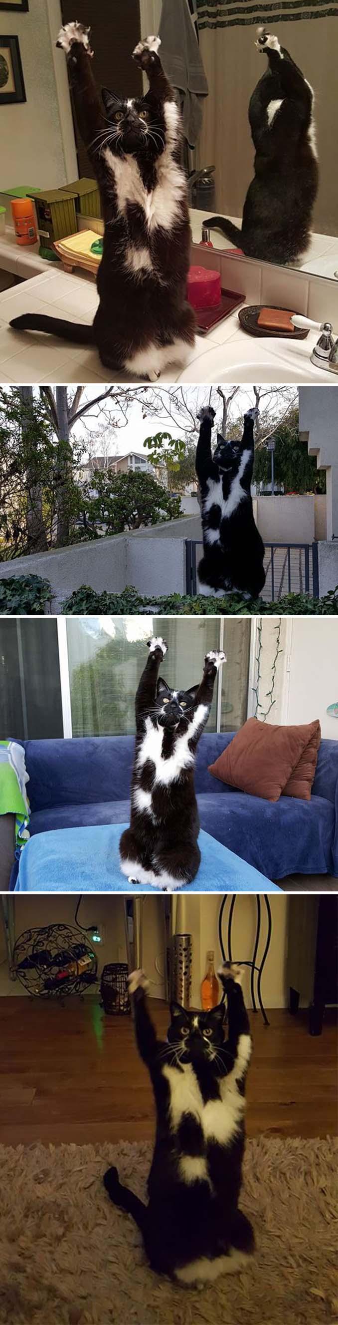 Γάτες που φέρονται πραγματικά παράξενα (15)