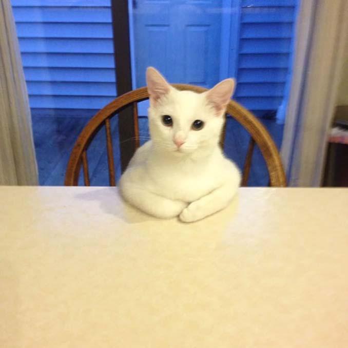 Γάτες που φέρονται πραγματικά παράξενα (17)