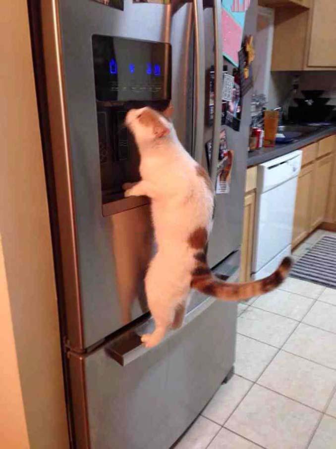 Γάτες που φέρονται πραγματικά παράξενα (19)