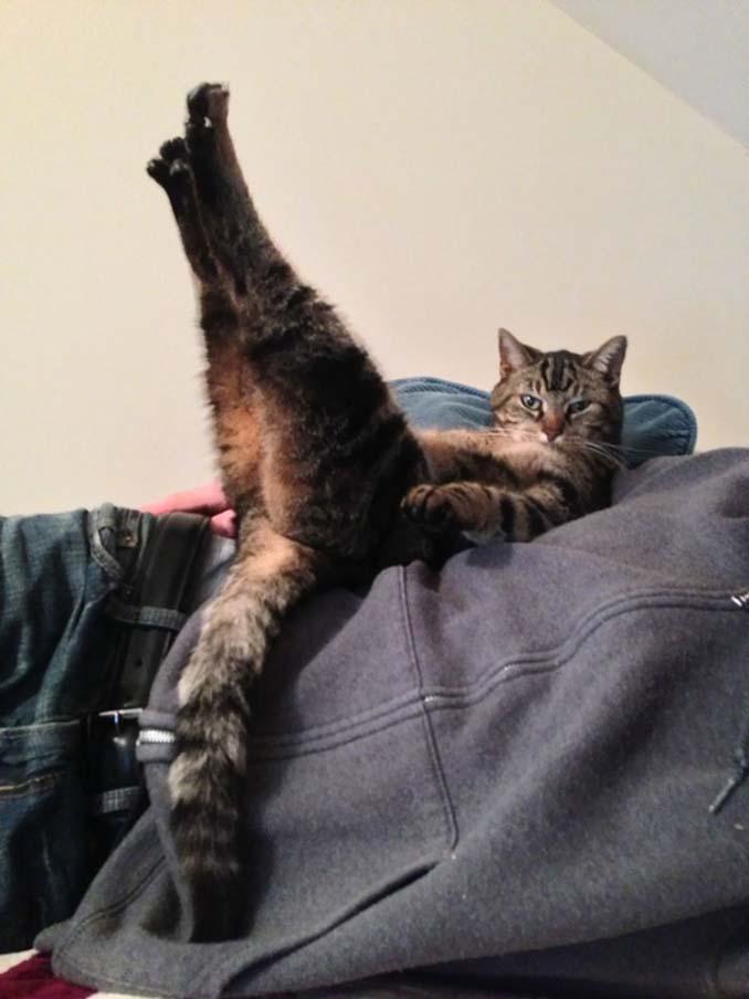 Γάτες που φέρονται πραγματικά παράξενα (23)