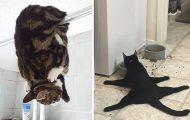 Γάτες που φέρονται πραγματικά παράξενα (27)