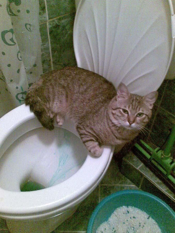 Γάτες που φέρονται πραγματικά παράξενα (26)