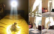 Γάτες που λατρεύουν τον ήλιο (1)