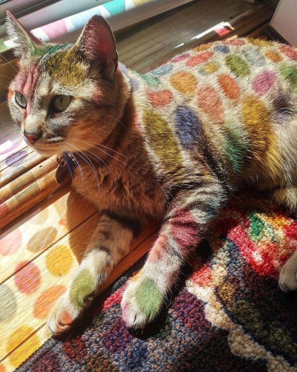 Γάτες που λατρεύουν τον ήλιο (4)