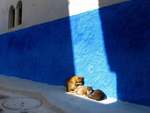 Γάτες που λατρεύουν τον ήλιο (8)