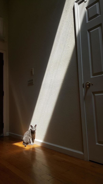 Γάτες που λατρεύουν τον ήλιο (9)