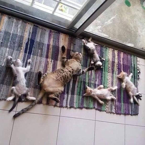 Γάτες που λατρεύουν τον ήλιο (13)