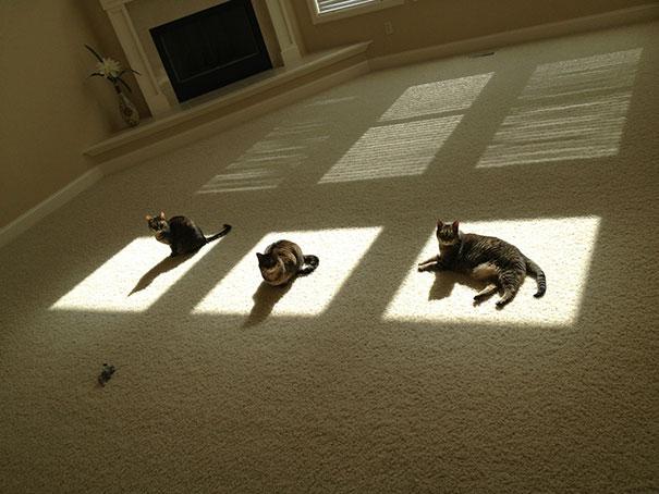 Γάτες που λατρεύουν τον ήλιο (15)