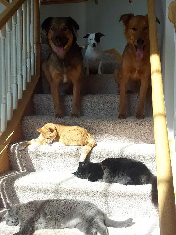 Γάτες που λατρεύουν τον ήλιο (16)