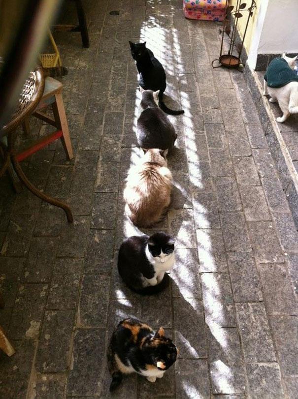 Γάτες που λατρεύουν τον ήλιο (17)